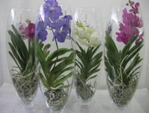 Уход за орхидеей в вазе и колбе
