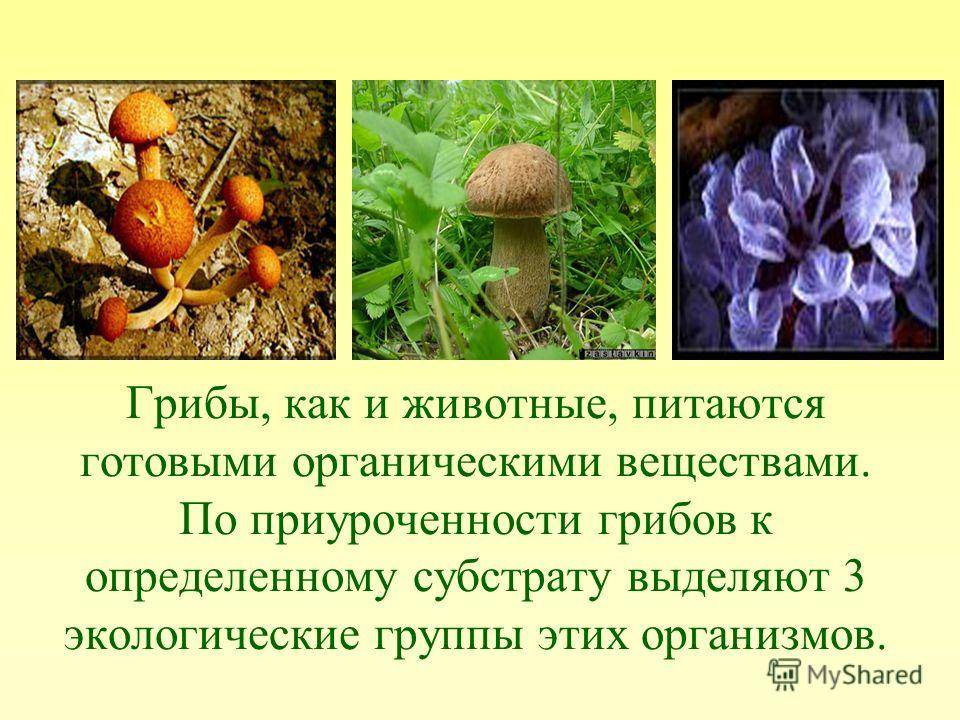 Значение грибов в жизни человека