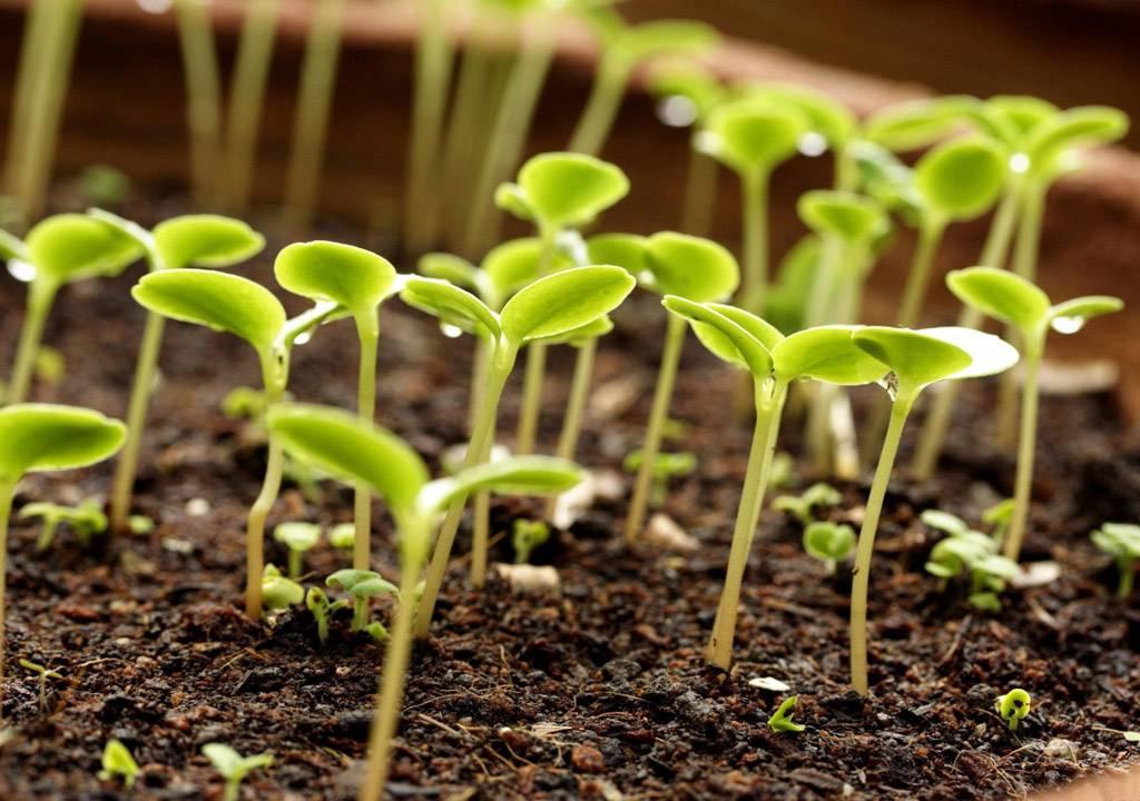 Применение фармайода для растений: действие препарата, аналоги