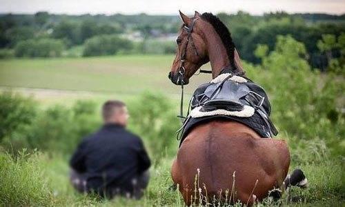 К чему снится лошадь. видеть во сне лошадь - сонник дома солнца