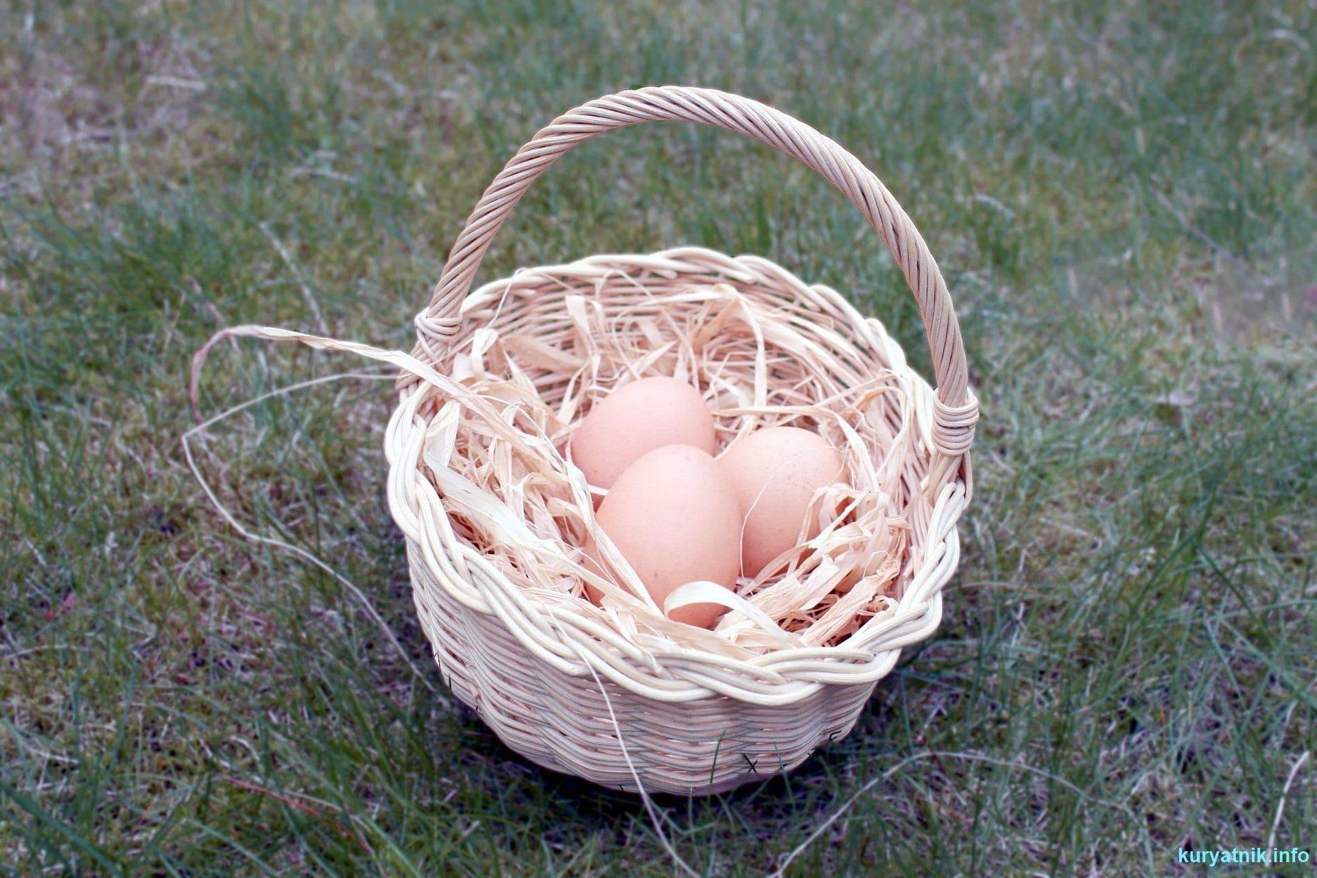 Тонкая и слабая скорлупа у куриных яиц: что делать — selok.info