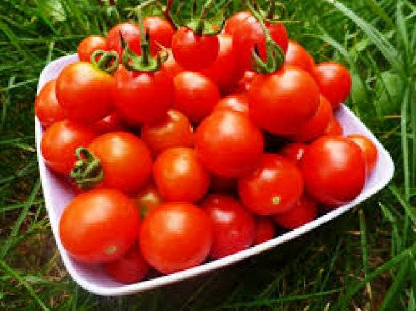 Помидор это ягода или овощ — разбираемся со специалистами и определяемся с характеристиками томатов