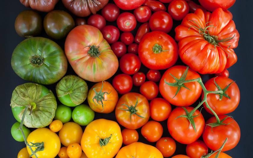 Помидоры, которые не болеют фитофторой: какие сорта томатов являются самыми устойчивыми, что делать для профилактики? русский фермер
