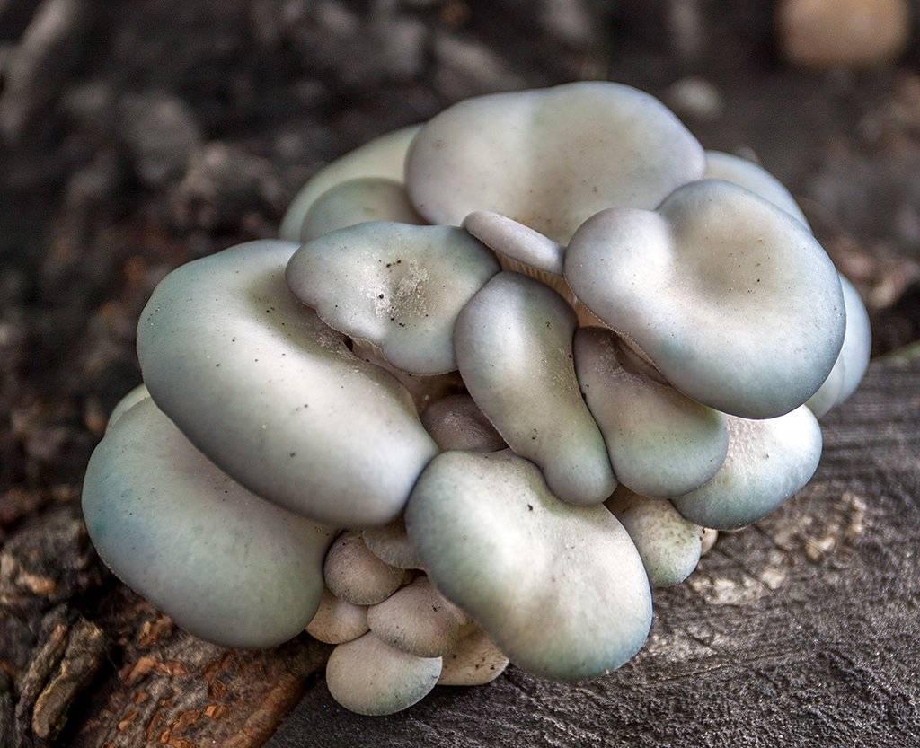 Особенности питания грибов