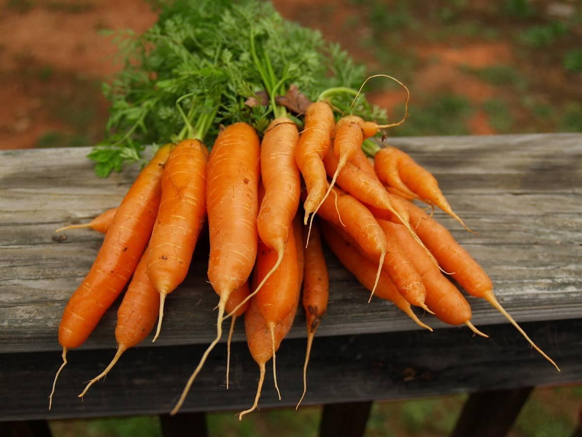 Cпособы хранения моркови в домашних условиях