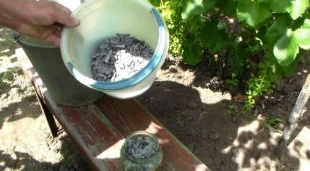 Чем удобрять виноград осенью