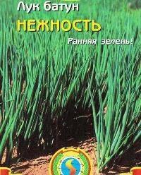 Как вырастить многолетний лук из семян: правила посадки и ухода