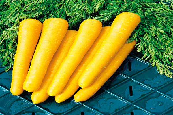 История морковки. интересные факты про морковь
