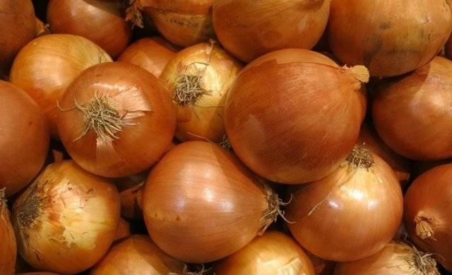 Семейный лук: выращивание и уход в открытом грунте и теплице, пошаговое руководство от посадки семян до сбора урожая
