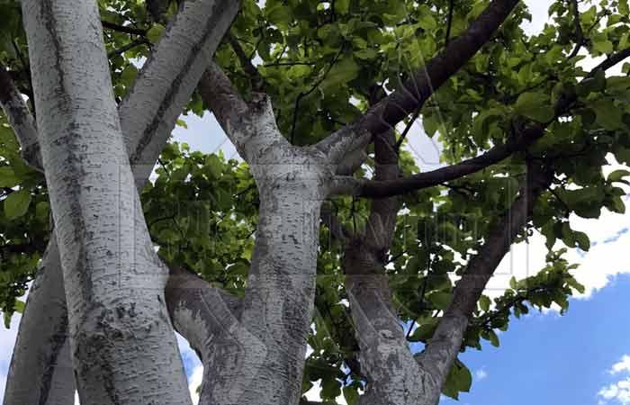 Обработка яблонь осенью от вредителей и болезней: полезные средства и рецепты
