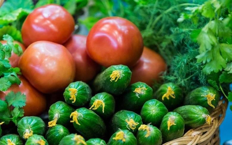 Огурцы подкормка дрожжами в открытом грунте, теплице, рецепты