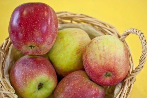 Яблоня «флорина»: описание сорта, фото, отзывы
