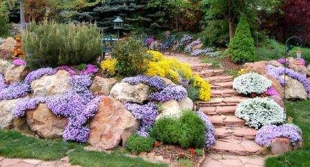 Растения для альпийской горки: многолетние цветы их названия и фото
