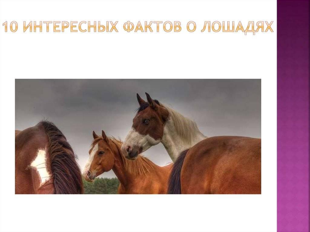 Самые интересные и невероятные факты о лошадях самые интересные и невероятные факты о лошадях