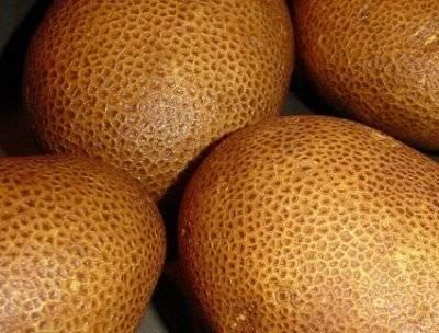 Сорт картофеля киви: описание сорта, характеристика, отзывы, фото