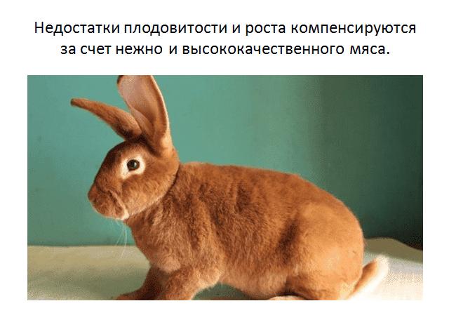 Сколько длится беременность у кроликов: признаки, срок окрола