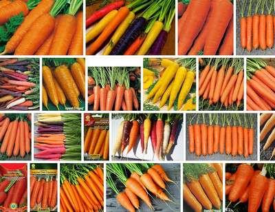 Семена моркови: лучшие по отзывам сорта для открытого грунта