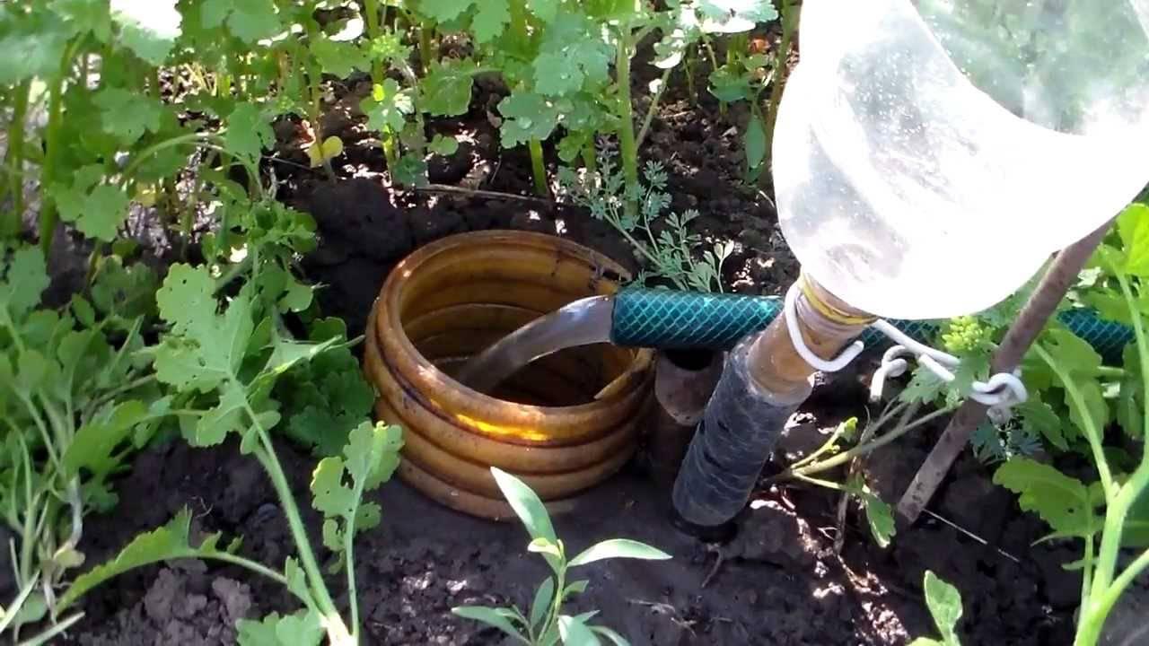 Полив винограда: способы и сроки полива виноградников (видео + 115 фото)