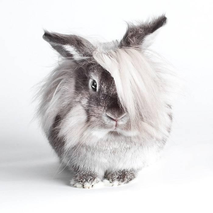 Топ 6 пород рыжих кроликов и как выбрать питомца, правила содержания и ухода