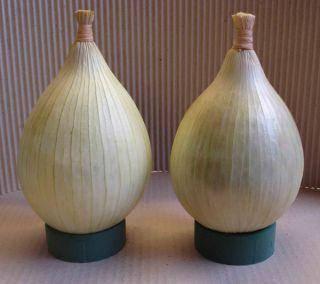 Выращивание лука эксибишен из семян: когда сажать, как правильно сеять, нужно ли замачивать до посева, и уход за рассадой, подготовка к переносу в открытый грунт