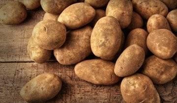 Правила выращивания картофеля по методу митлайдера