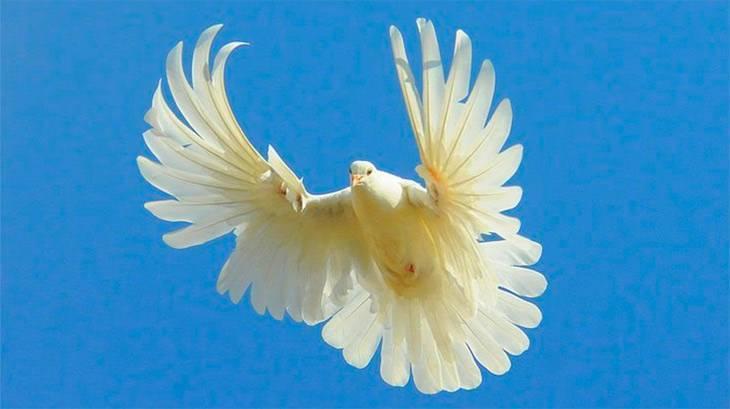 Николаевские голуби: описание и выращивание