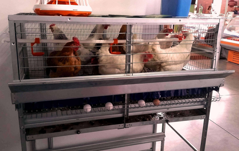 Клетки для кур своими руками - чертежи и размеры для несушек с яйцесборником, клеточное содержание в домашних условиях