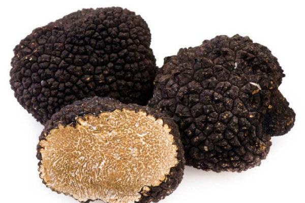 Трюфель гриб – описание, виды, где и как растет, поиск, фото