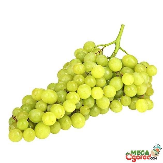 Почему виноград кишмиш без косточек и чем опасна солнечная ягода