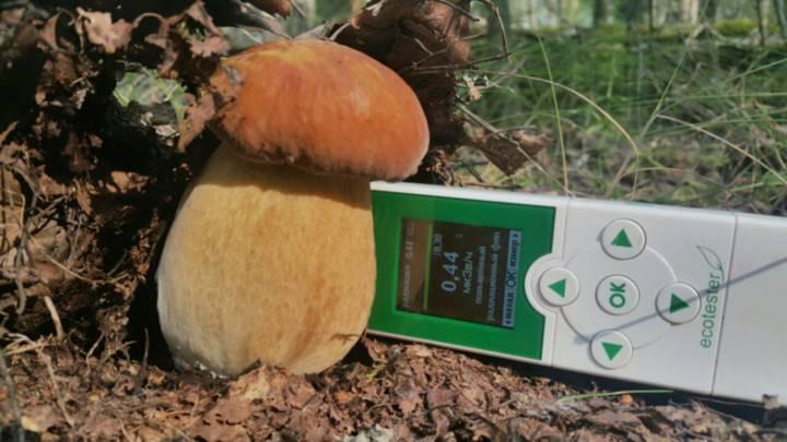 Кириллица    где нельзя собирать грибы