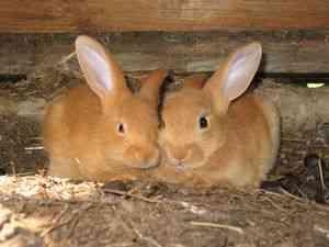 Зарабатываем на кроликах