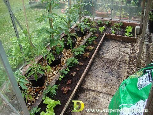 Как вырастить хорошую рассаду томатов и перца в условиях дома: пошаговый алгоритм посева семян, а также как правильно размещать помидоры рядом с другими пасленовыми? русский фермер