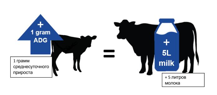 Откорм бычков с первых дней жизни: советы, нормы. правильное кормление бычков: что можно, а чего нельзя. что должен включать рацион бычков в первые недели и месяцы жизни