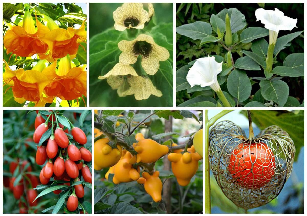 Виды selo.guru — интернет портал о сельском хозяйстве
