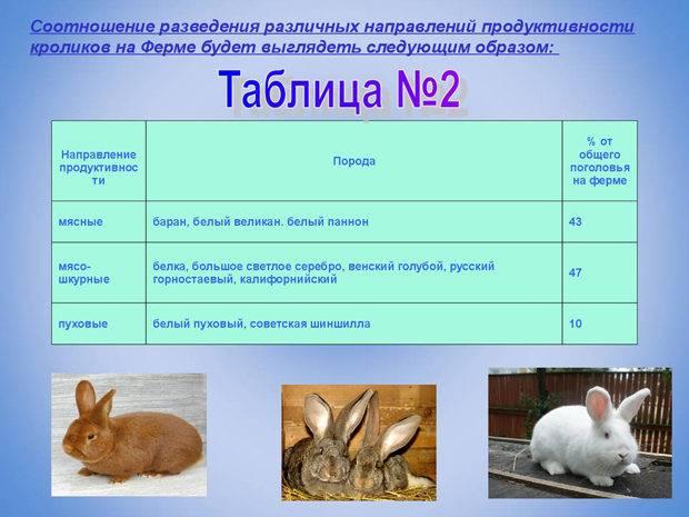 Разведение кроликов как бизнес, доходы и расходы в кролиководстве.