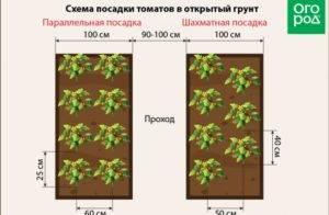 Посадка перца в открытый грунт: рассадой, расстояние между растениями, отзывы