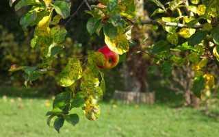 Обрезка яблонь: когда и как правильно делать, особенности осенью и в другое время года