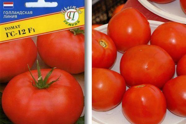 Томат гс-12 f1: описание и характеристика сорта, урожайность с фото