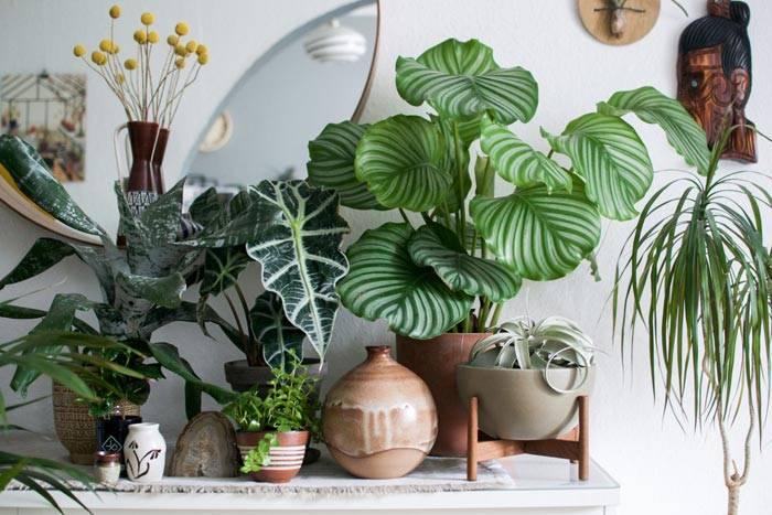 Популярные большие комнатные растения с фото и названиями