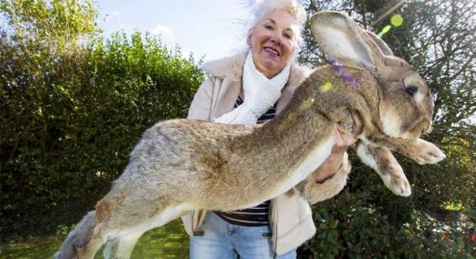 Карликовый кролик: как ухаживать в домашних условиях, условия содержания, чем кормить, размножение животных