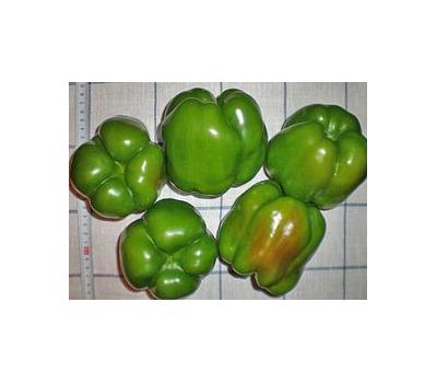 Перец юпитер: характеристика и описание сорта, урожайность, отзывы