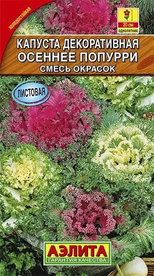 Декоративная капуста: посадка и уход, выращивание в открытом грунте, фото в ландшафтном дизайне