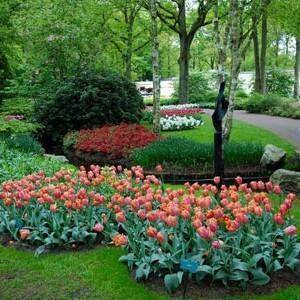 Когда сажать тюльпаны осенью в подмосковье?