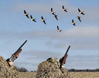 Весенняя охота на гуся. чучела, повадки и правила успеха