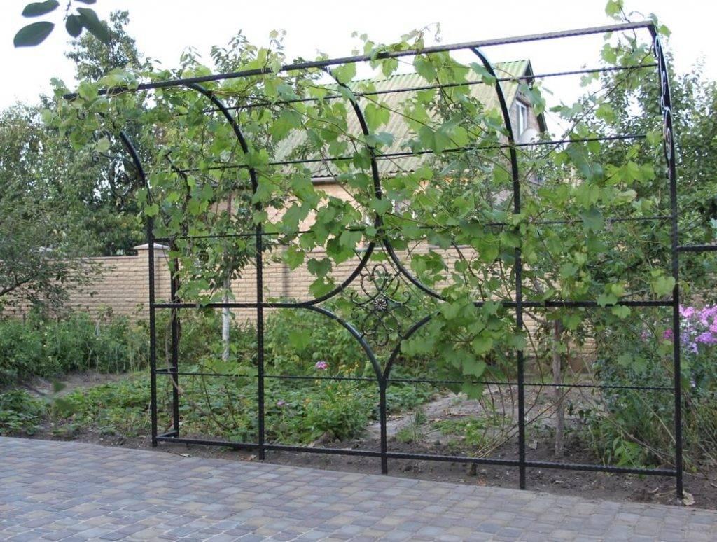 Опора для винограда: как сделать подпорку своими руками на даче + фото