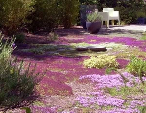 Как посадить газонную траву своими руками. виды газонной травы