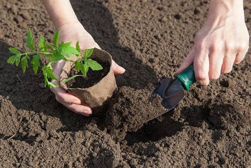 Что класть в лунку при посадке помидоров: какие минеральные удобрения необходимо вносить при выращивания томатов, нужно ли добавлять навоз и сыпать луковую шелуху? русский фермер