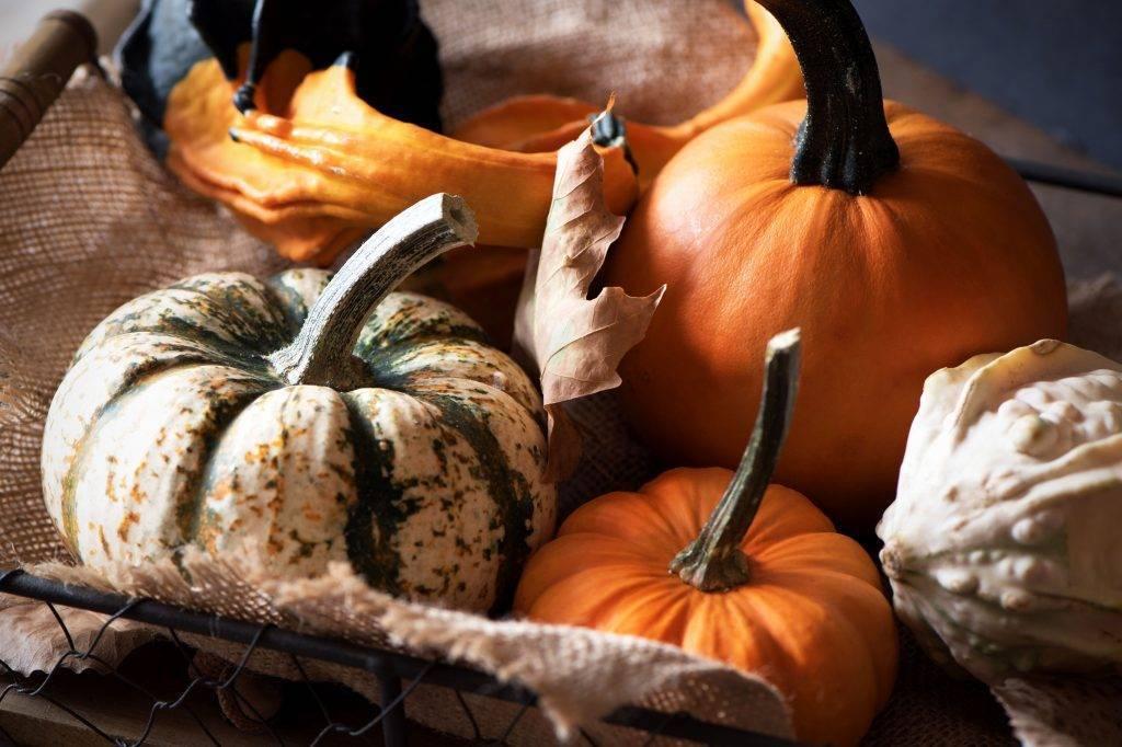 Декоративная тыква-груша: рекомендации по выращиванию, уходу, описание видов