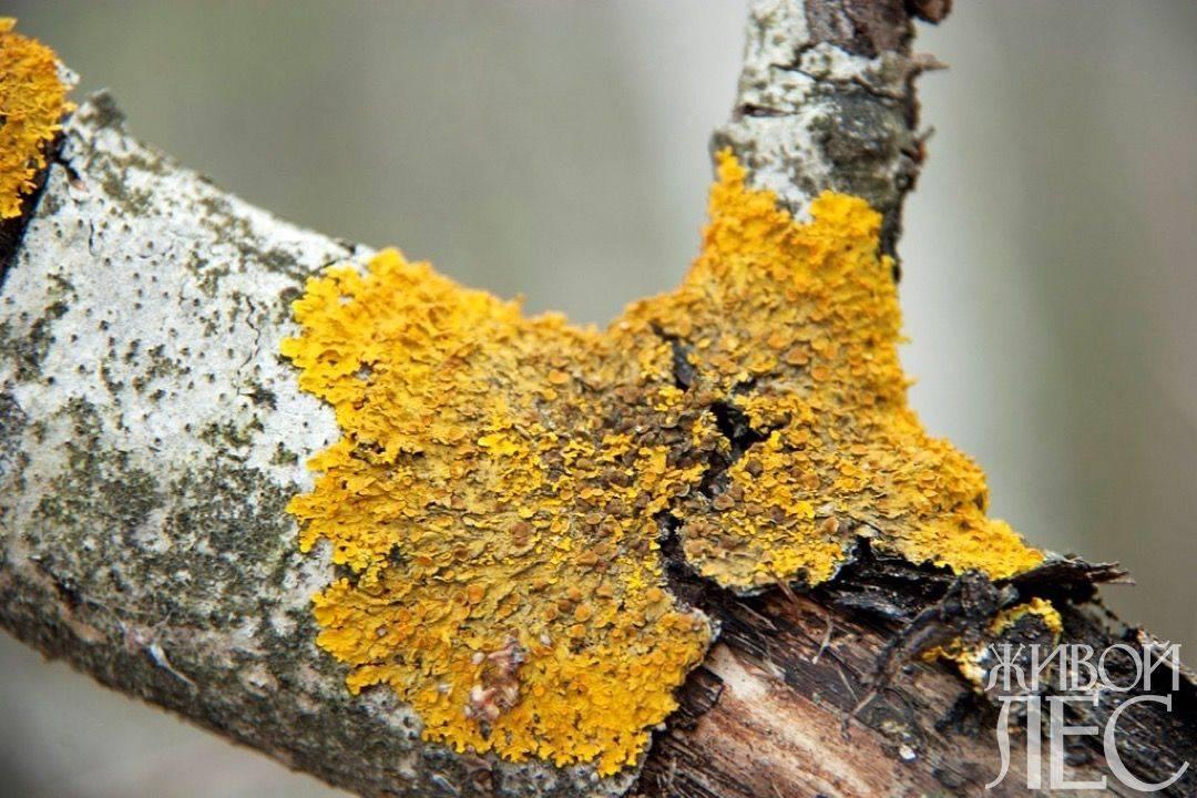 Особенности симбиоза и взаимоотношений грибов и растений