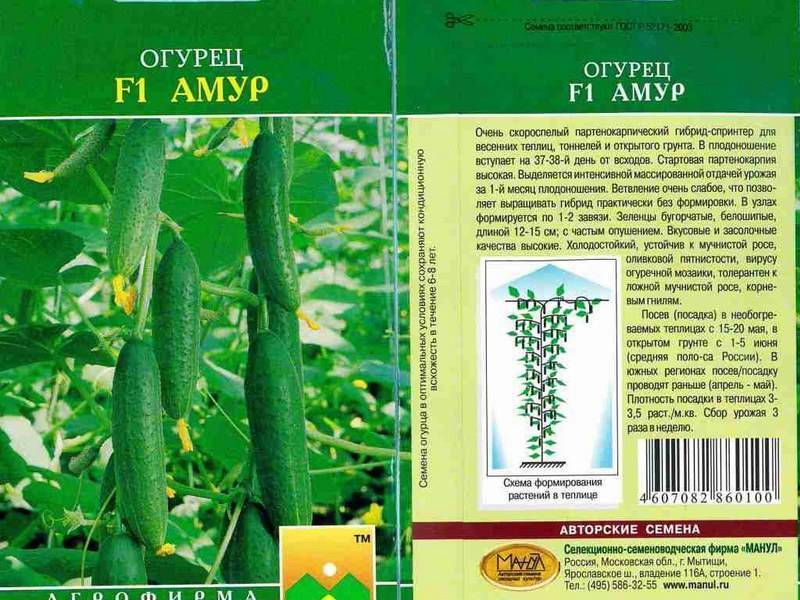 Описание сорта огурца амур, его выращивание и уход